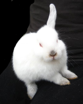 Image result for one eared bunny